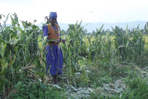 "One of the peasant women employed as a ""human scarecrow"" in the rice fields."